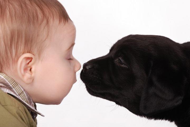 Манеж для собак или детей?